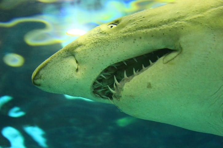 shark-1742357_1280.jpg